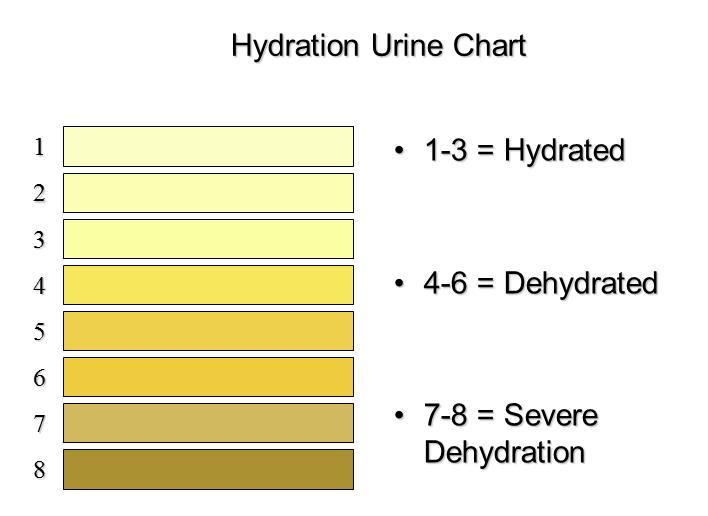 Urine Chart