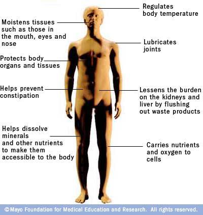 Hydration on Body